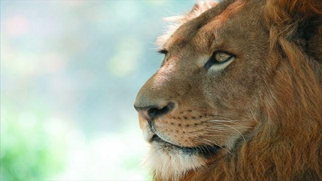 LION MEDIAの目次デザインをプチカスタマイズ