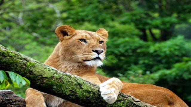 LION MEDIAのサイドバーウィジェットリストをカスタマイズ&アイコンフォントの使い方