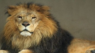 LION MEDIAにPAGETOPボタンを追加する